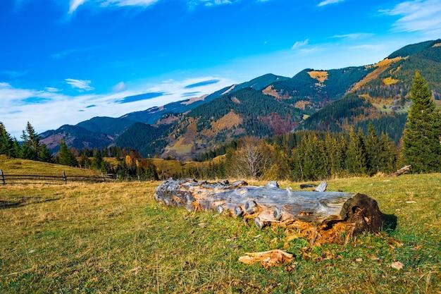 Gęsty mistyczny las iglasty rosnący na wzgórzach leżących obok kłody w słoneczny ciepły letni dzień