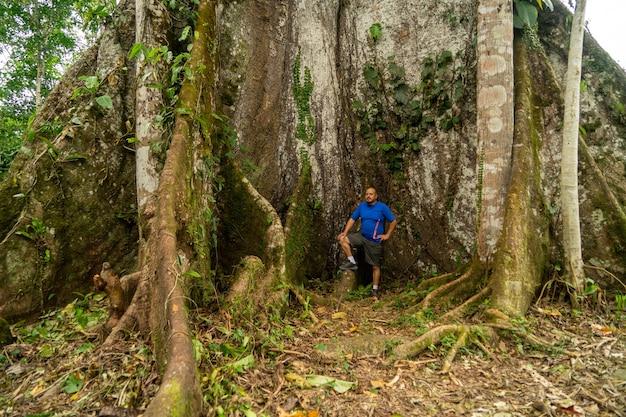 Giante ceiba tree, misahualli, amazonka, ekwador,