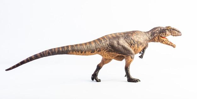 Giganotosaurus, dinozaur na białym tle.
