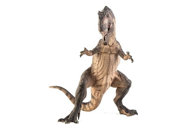 Giganotosaurus dinozaur na białym tle.