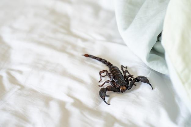 Gigantyczne leśne skorpiony czołgające się na łóżku.