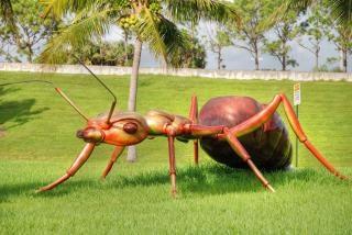 Gigantyczne mrówki, west palm beach na florydzie, jan