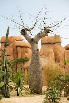 Gigantyczny baobabu drzewo obok skał w naturze