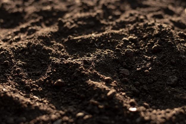 Gleba do uprawy roślin.