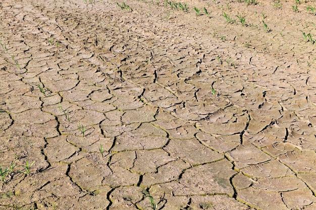 Gleba spękana przez suszę