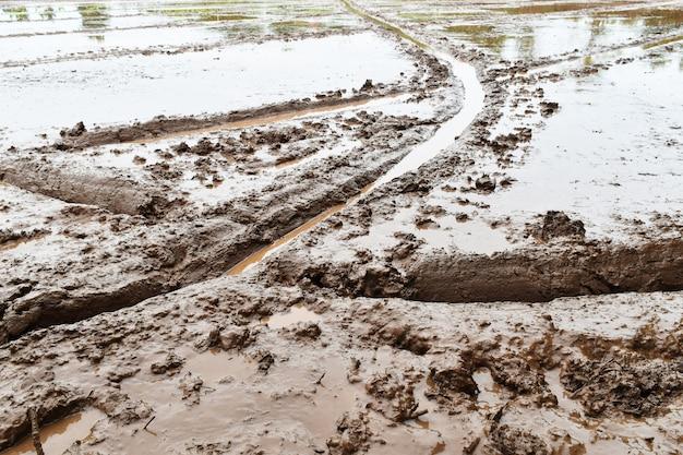 Gleba w polu ryżowym przygotowuje się do uprawy ryżu w rolnictwie