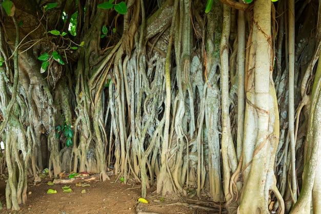 Głęboka dżungla na sri lance. tropikalny krajobraz cejlonu