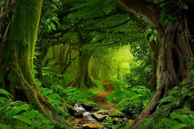 Głęboka tropikalna dżungla azji południowo-wschodniej