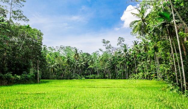 Głęboki las dżungli sri lanki. tropikalny krajobraz cejlonu
