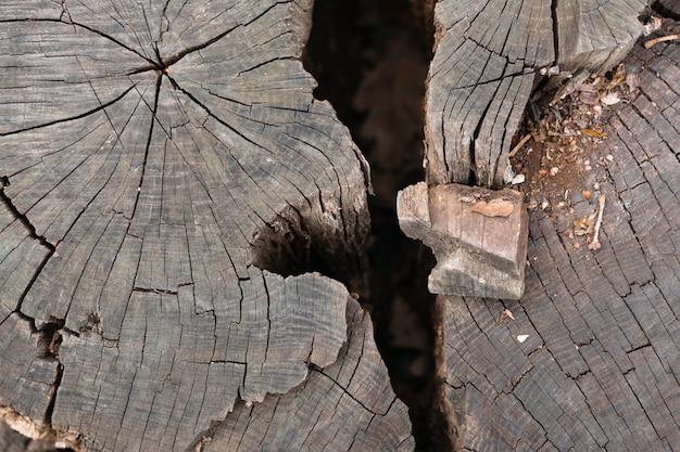 Głębokie pęknięcie w wycięciu drzewa