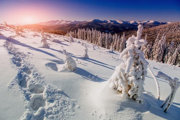 Głębokie ślady na śniegu