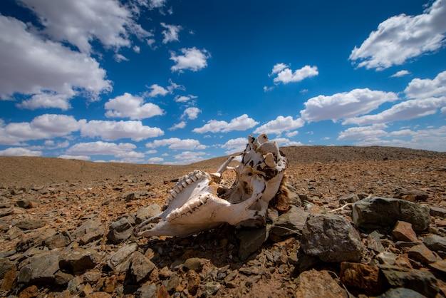 Globalne ocieplenie sprawia, że na ziemi jest suchy krajobraz