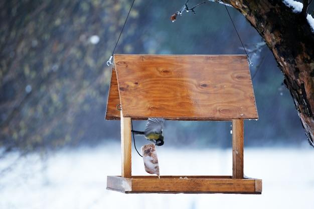 Głodna modraszka jedząca z karmnika ogrodowego