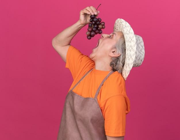 Głodna starsza kobieta ogrodniczka w kapeluszu ogrodniczym, trzymająca i udając, że je kiść winogron