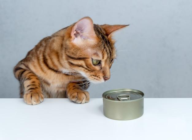 Głodny kot bengalski i mokra karma dla kotów na stole