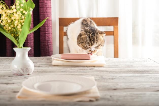 Głodny kot domowy siedzi przy stole z gotowaną kiełbasą. domowy kot je kiełbasę z talerza.