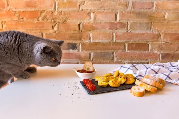 Głodny kot węszy i chce zjeść pierogi przygotowane do sesji zdjęciowej.