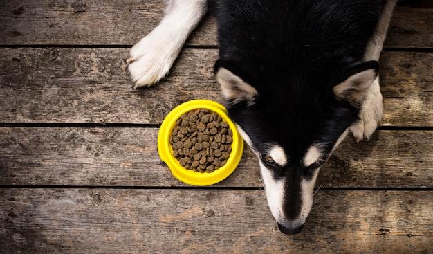 Głodny pies leży w pobliżu miski z jedzeniem