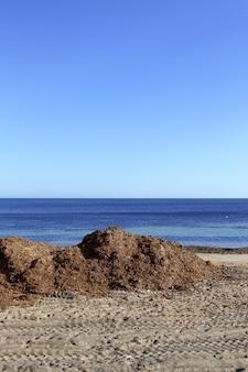 Glony wodorosty suszone morze śródziemne plaża ocean brzeg