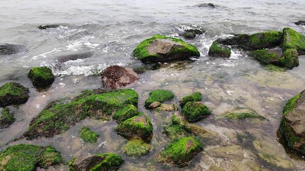Glony zielone pokryte głazy na plaży wybrzeża morskiego oceanu. mech morski przyklejony do kamieni. skały pokryte zielonymi wodorostami w wodzie morskiej. malowniczy letni krajobraz przyrody