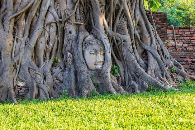 Głowa buddha statua w drzewie zakorzenia przy watem mahathat w ayutthaya prowinci, tajlandia