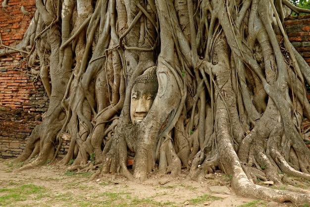 Głowa buddha wizerunek w bodhi drzewie zakorzenia w wata mahathat antycznej świątyni, ayutthaya dziejowy park, tajlandia