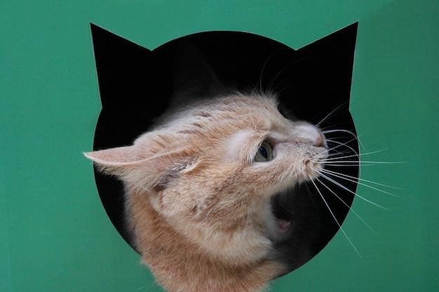 Głowa czerwonego kota z otwartymi ustami z profilu wystająca z czarnej dziury w kształcie głowy kota na zielonym tle.