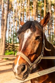 Głowa konia z uzdę; zbliżenie na zewnątrz strzał.