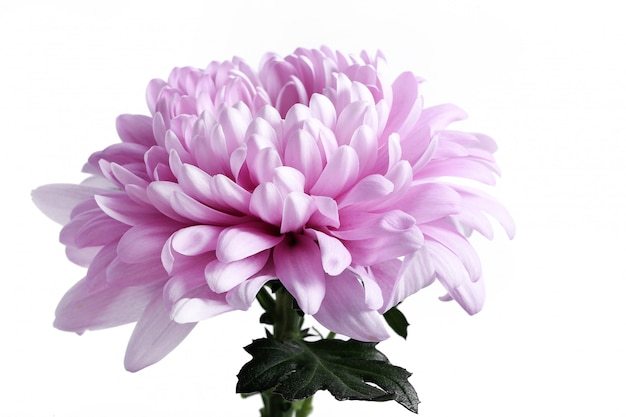 Głowa kwiat na białym tle