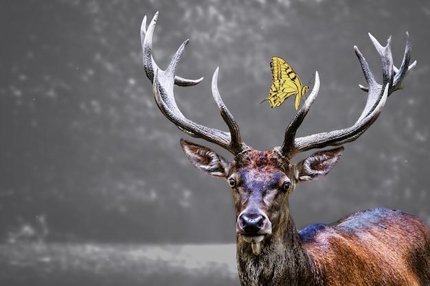Głowa łosia i na niej żółty motyl
