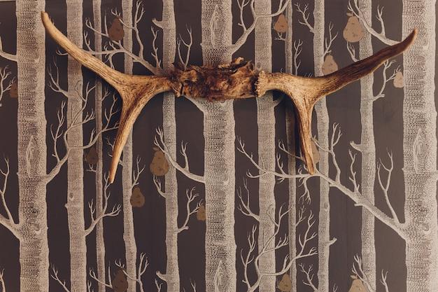 Głowa martwego jelenia z rogami i futrem na ścianie w pokoju.