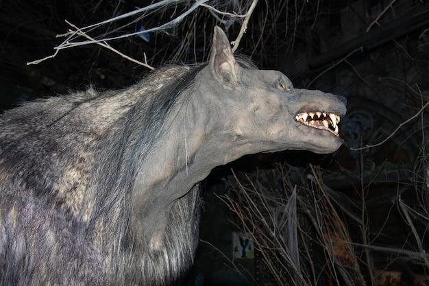 Głowa wilkołaka z profilu wśród ciemności i gałęzi, uśmiechnięty pysk, w muzeum bestiariuszy - sankt petersburg, rosja, czerwiec 2021.