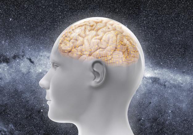 Głowa z mózgiem