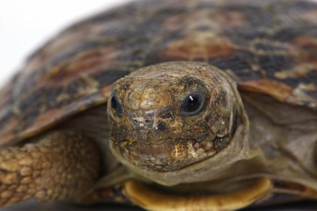 Głowa żółwia