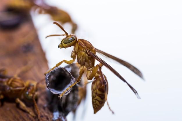Gniazdo buduje hornets