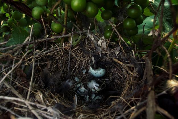 Gniazdo mockingbird