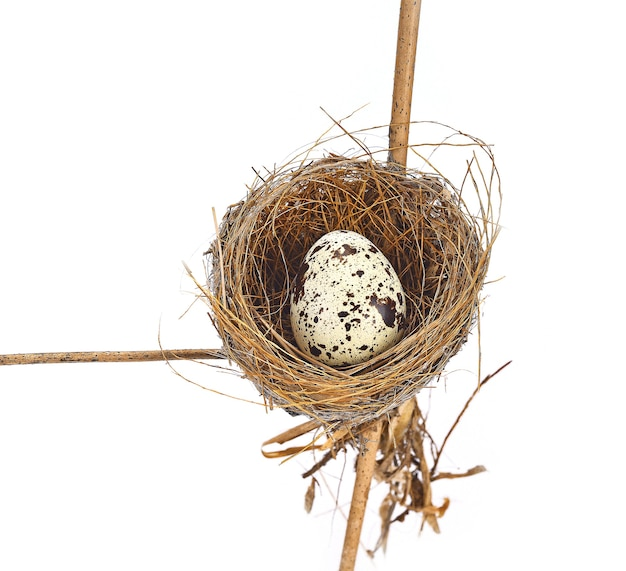 Gniazdo ptaka i jajko na białym tle