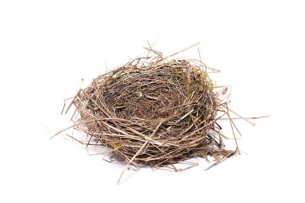 Gniazdo ptaka, izolować, dzikie gniazdo małego ptaka