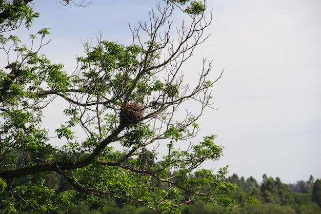 Gniazdo ptaków na wiosnę