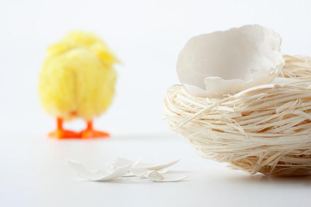 Gniazdo z pęknięciami skorupki jajka i odchodzącym kurczakiem