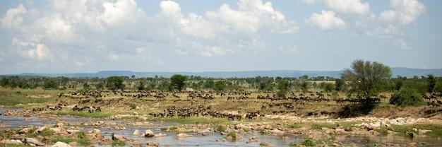 Gnu w serengeti, tanzania, afryka