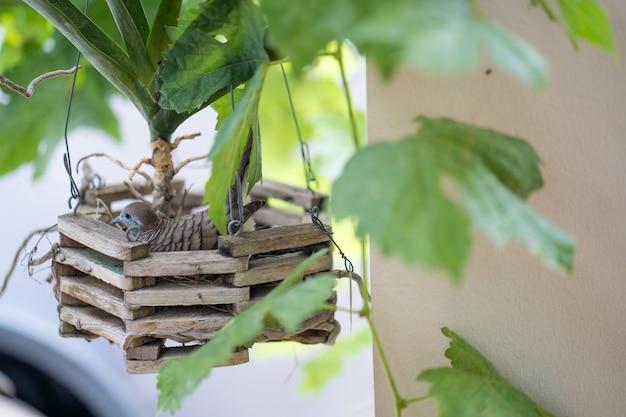 Gołąb na jajku w drewnianym gnieździe