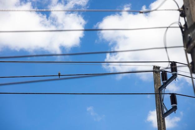Gołąb siedzący na linii energetycznej w pogodny dzień z błękitnym niebem i białymi chmurami w tle.