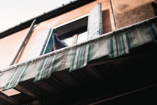 Gołąb siedzi na dachu i patrzy prosto w ramę