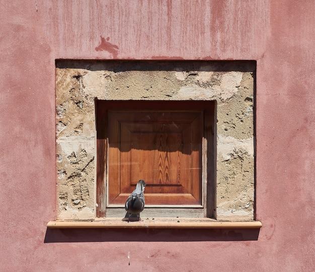 Gołąb w ramie okna