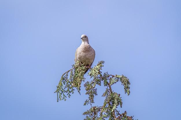 Gołąbek siedzący na gałęzi drzewa pod błękitnym niebem
