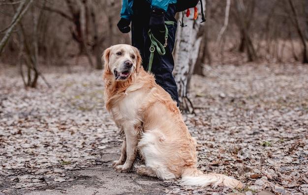 Golden retriever pies siedzi na posadzce z opadłymi liśćmi w parku podczas jesiennego spaceru