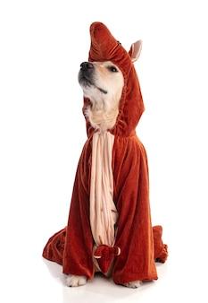 Golden retriever pies z przebraniem kangura na białym tle