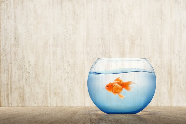 Goldfish w akwarium