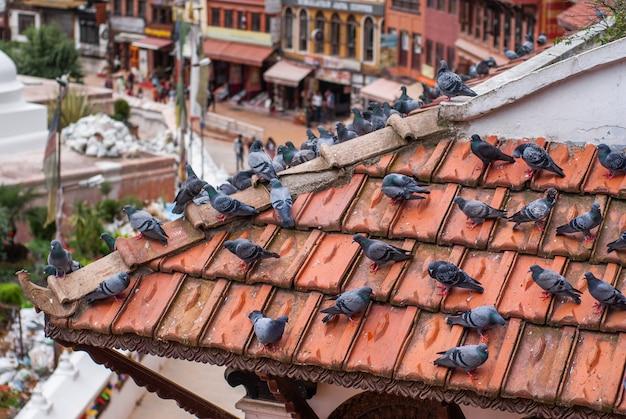Gołębie siedzą na brązowym dachówkowym dachu budynku w pobliżu stupy boudhanath w katmandu w nepalu